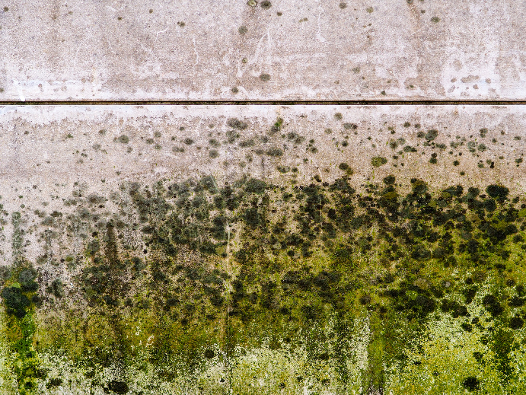 Is MOLD a Concern to You?